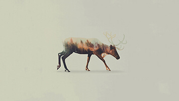 If you like the Winter Stag wallpaper you can easily get it for free on your computer, or you can just pick one of the winter animals wallpaper from our catalog.