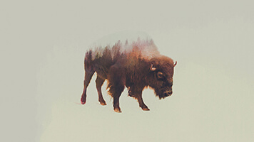 Choose the beautiful Winter Buffalo wallpaper from the UR Browser catalog, it's ideal for those cold days when you want to stay inside. Get this free Winter Buffalo wallpaper on your computer and don't let the frost bite!