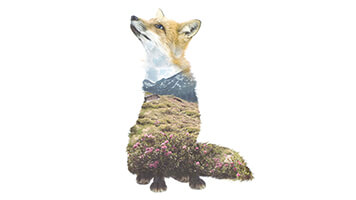 Are you ready for winter? Pick the Winter Fox wallpaper for our catalog and stay in line with the latest designs! The Winter Fox wallpaper it's a beautiful double exposure illustration that combines the pureness of nature with the slickness of the wild fox.