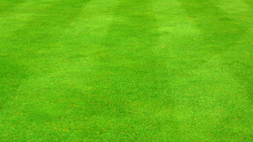 Enjoy the green football field on your computer! Set the Stadium Grass wallpaper on your homescreen and get ready for some professional soccer. The Stadium Grass theme comes with it's own color set!