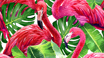 Feel the tropical breeze with the colorful Flamingos theme! It's fun and cute and as pink as the Flamingos get! Set it for free on your homescreen and enjoy these cute birds!