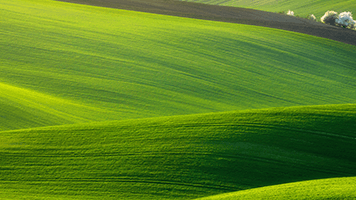 The grass is greener in Moravia! Take our word on that, or set them Moravia theme on your homescreen if you're a nonbeliever!
