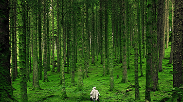 Take a walk to the deep of the forest like a true forest lover would! Enjoy the fresh air, the lush vegetation and all the life that roams under the leaves! The Forest Lover theme is perfect for all nature enthusiasts!