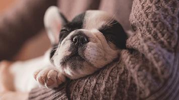 Télécharge gratuitement ce thème dénommé Visage de chien sur ta page d'accueil ! Nous savons que tu l'aimes parce que c'est le plus mignon du monde ! Choisis le thème dénommé Visage de chien dans notre catalogue et tu es prêt à tout!