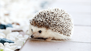 Feeling sneaky like a hedgehog in the fog? Good, than try this cute Hedgehog theme on you homepage! This wallpaper is free and comes with it's own color set.