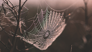 Beware a predator is waiting in the shadow for you to get caught in the web! So stay safe in your house and just set the Web theme on your homepage! The big bad spider won't get to you this way!