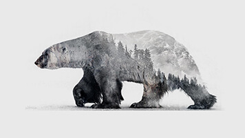 Enter the antarctic world with the Polar Bear 2 wallpaper. You can get it for free on your computer and share it with other polar bear fans.
