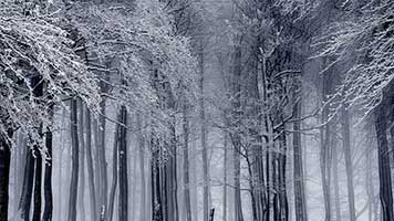 Step into the winter forest where the trees are covered in snow! The landscape reminds of the frozen siberian forests! Set the Winter Forest wallpaper on your homepage, and don't let the frost bite you.