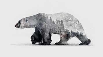 Betrete die arktische Welt mit dem Hintergrundbild Eisbär 2. Du kannst es kostenlos auf deinem Computer benutzen und mit anderen Eisbären-Fans teilen.