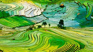 Experience the beauty of the rice fields. Get this free Rice Fields wallpaper on your computer and have a great virtual trip!