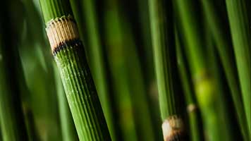Enjoy this beautiful Bamboo wallpaper on your homepage and recharge your batteries for those everyday obstacles! The Bamboo wallpaper is free to use and works best with all the green color sets.
