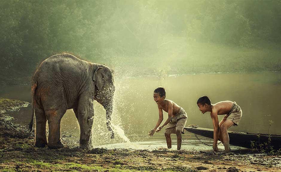 Bebe Elephant Fond D Ecran Ur Personnalisation Par Ur