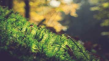 If you like this Moss theme set it for free on your homepage! It's beautiful and fresh and perfect for all nature lovers out there! The Moss theme comes with its own personalized color set!
