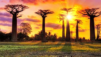 You'll need to bring all your friends if you want to hug this baobab trees! They're as big as they get but none the less beautiful and just a majetic thing to watch! We know they grow only in certain areas of the world that's why we brought them closer to you with the Baobab theme!