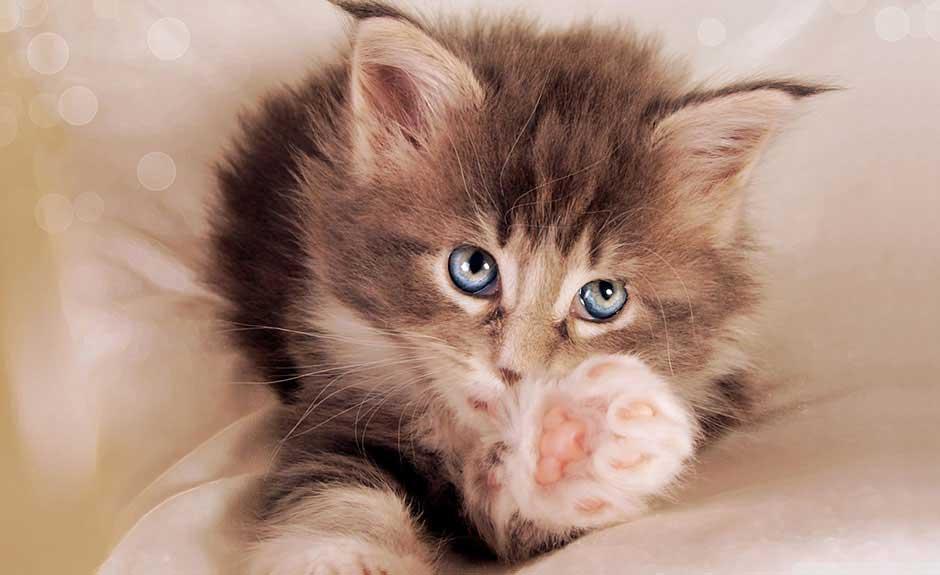 Baby Cat Wallpaper - UR Customization by UR Browser
