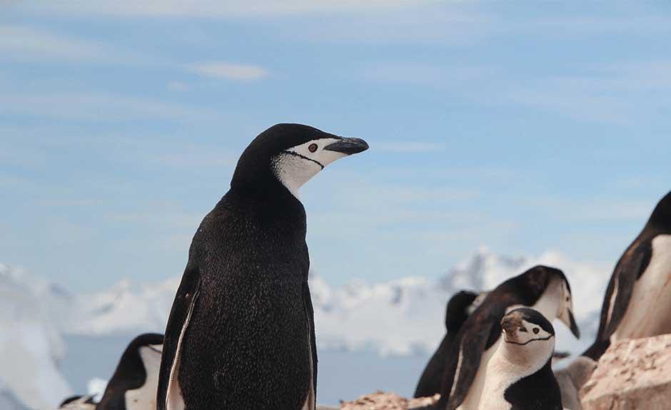 Betrete die wilde Tundra! Diese netten Pinguine werden dir den Weg weisen! Stelle das Thema Pinguin ein und du kannst die unbekannte Vereisung entdecken!