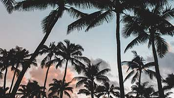 Have a pina colada and relax under the palm trees! Summer has just begun and it smells like vacation from a mile away! Set this Palm Trees theme on your homepage and you're one step closer to the seaside!