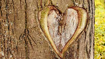 Even trees have hearts! You don't believe us? We'll convince you with our beautiful Tree Heart wallpaper. Get it free on your computer spread the love for trees.