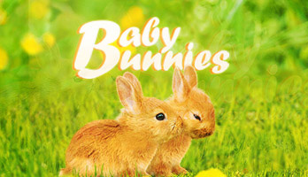 Bunnies are cute, but baby bunnies are whole lot cuter! Take a look at the Baby Bunnies wallpaper and try not to like them!