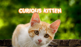 If you're as curious as the Curious Kitten, try out one of our cat wallpapers. Get this free CuriousKitten wallpaper on your computer, or any other parallax from the UR Browser catalog, we promise a purrfect homepage!