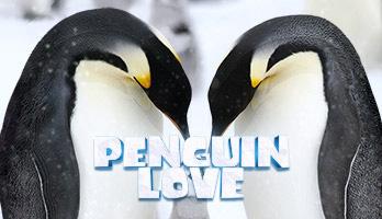 Los pingüinos con criaturas majestuosas.  Si te gustan los Pingüinos enamorados obtén gratis en tu computador este fondo de pantalla.
