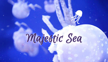 If you like the Majestic Sea and all of its amazing creatures, get this free Majestic Sea with jelly fish wallpaper on your computer.
