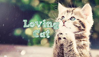 If you're a cat lover we have a loving cat just for you! The Loving Cat wallpaper don't need any feeding but make sure to pet it from time to time!